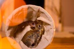 nice grey rabbit in wicker basket. Warm light glares. stock image