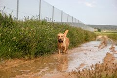 HAPPY DOG JOY IN THE NATURE royalty free stock photo