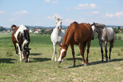 Nice herd of horses together on pasturage Stock Images