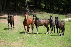 Nice herd of horses together on pasturage Stock Photo