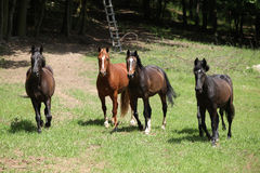 Nice herd of horses together on pasturage Royalty Free Stock Photography