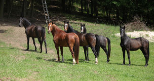 Nice herd of horses together on pasturage Royalty Free Stock Photo