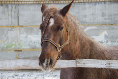 Nice horse Stock Images