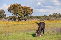 Nice horse grazing Stock Photo
