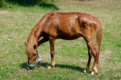 Nice horse on green grass stock photography