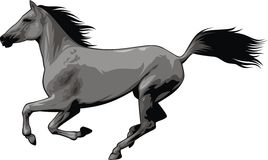 Nice horse Stock Image