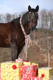 Nice horse with scarf and christmas gifts in winter Stock Photo