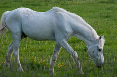 Nice horses Royalty Free Stock Images