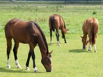 Nice horses Royalty Free Stock Photography