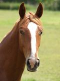 Nice horses Stock Image