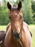 Nice horses Royalty Free Stock Photos