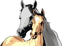 Nice horses Royalty Free Stock Image