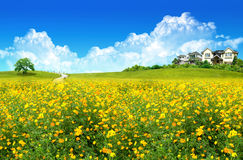 Nice house on green field. And flower Stock Photo
