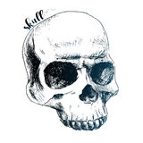 Nice human skull Stock Images
