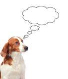 Nice hunting dog thinking. Pensive hunting dog isolated on white background stock photo