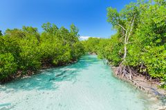 Amazing landscape  view of natural turquoise ocean river flowing in tropical garden at Cuban Cayo Coco island Stock Photos