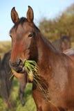 Nice kabardin horse in autumn