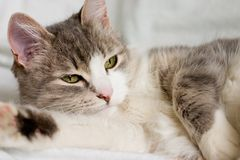 Nice kitten. The cat lays and looks to aside Royalty Free Stock Image