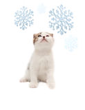 The nice kitten looks at snowflakes Stock Photo