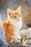 Nice kitten on stones close-up Royalty Free Stock Image