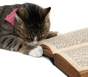 Nice kitty with bandana Royalty Free Stock Image