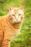 Nice Kitty Stock Image