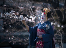 Nice lady in the image of Maiko the apprentice Geisha Royalty Free Stock Image