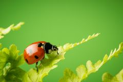Nice ladybug on fern on green background Stock Images