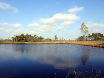 Beautiful small lake, trees and plants in Aukstumalos swamp, Lithuania royalty free stock photos