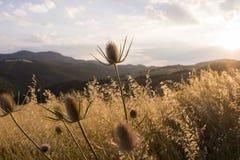 Nice landscape Basilicata Stock Image