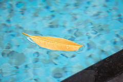 This nice leaf floating on the surface of the pool is drifting around in the wind with absolute freedom, on top of the lovely aqua. Blue waters of the swimming Royalty Free Stock Photography