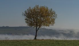 Nice leaf tree with blue sky and inverse in valley. Near Zitkova village royalty free stock image