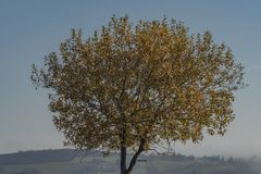 Nice leaf tree with blue sky and inverse in valley. Near Zitkova village stock image