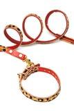 Nice leash and collar Stock Photo