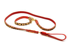 Nice leash and collar Royalty Free Stock Image