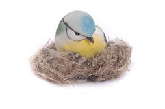 Nice Little Blue tit Stock Photography