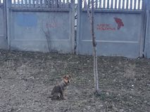A cute little little dog but left Stock Images