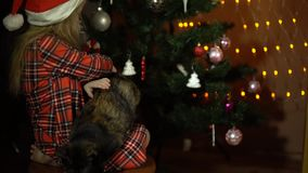 A little girl is stroking a cat sitting on a chair in front of a Christmas tree. stock video footage
