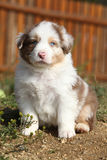 Nice little puppy sitting in front of orange fence Royalty Free Stock Images