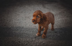 Nice little sad puppy standing on the street. Beautiful sad puppy on street Royalty Free Stock Images