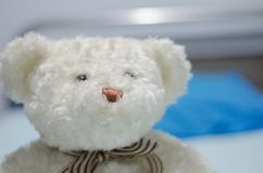 Nice little white bear. The picture shows a nice white teddy bear with a cute tie stock image