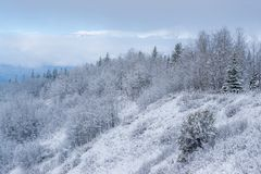 Canadian South Slope with Snow. A nice lonely juniper tree on a south facing slope is contrasting with the boreal forests of northern Canada stock images