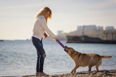 Close up portrait of beautiful long haired girl training her Labrador Retriever dog on the beach royalty free stock photography