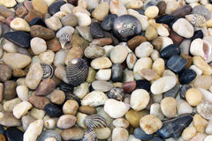 Sea Pebble Royalty Free Stock Photo