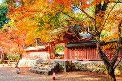 Nice maple season, Japan Stock Photography