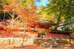 Nice maple season, Japan Royalty Free Stock Photo
