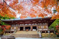 Nice maple season, Japan Stock Image