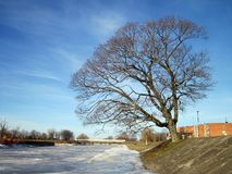 River Skirvyte, tree  and bridge in winter, Lithuania Stock Photo