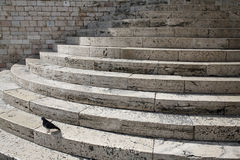 Nice marble steps with pigeon. Nice half circular marble steps to the municipality of Perugia, Umbria - Italy Royalty Free Stock Images