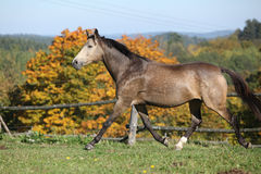 Nice mare on autumn pasturage Stock Images